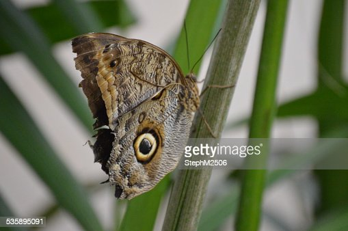 Butterfly resting on a green plant : Stock Photo