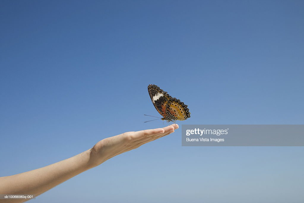 Butterfly resting on female hand extended against clear sky : Stock Photo
