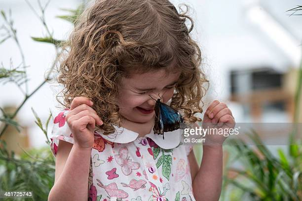 A butterfly sits on a girl's nose in the Natural History Museum's 'Sensational Butterflies' outdoor butterfly house on March 31 2014 in London...