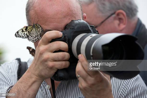 A butterfly sits on a photojournalist's head in the Natural History Museum's 'Sensational Butterflies' outdoor butterfly house on March 31 2014 in...