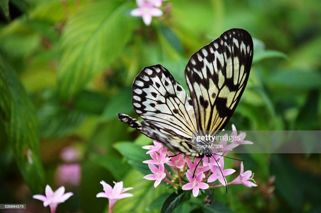 Schmetterling sitzt auf Blumen : Stock-Foto