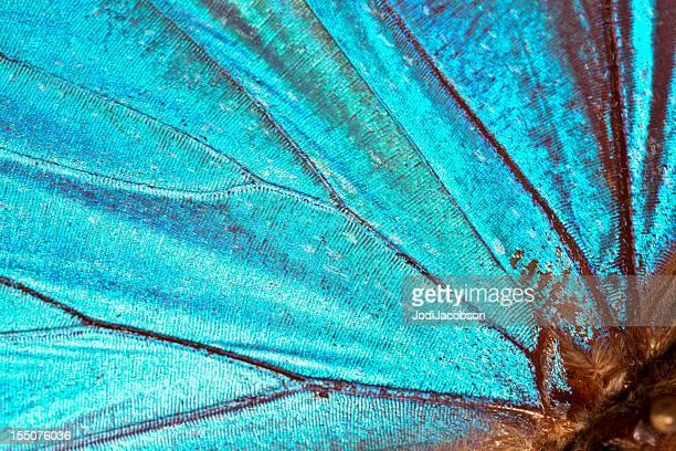 Fundo de asas de borboleta