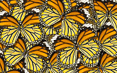 abstract nature background macro of butterfly wing background