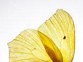 Butterfly wing, macro