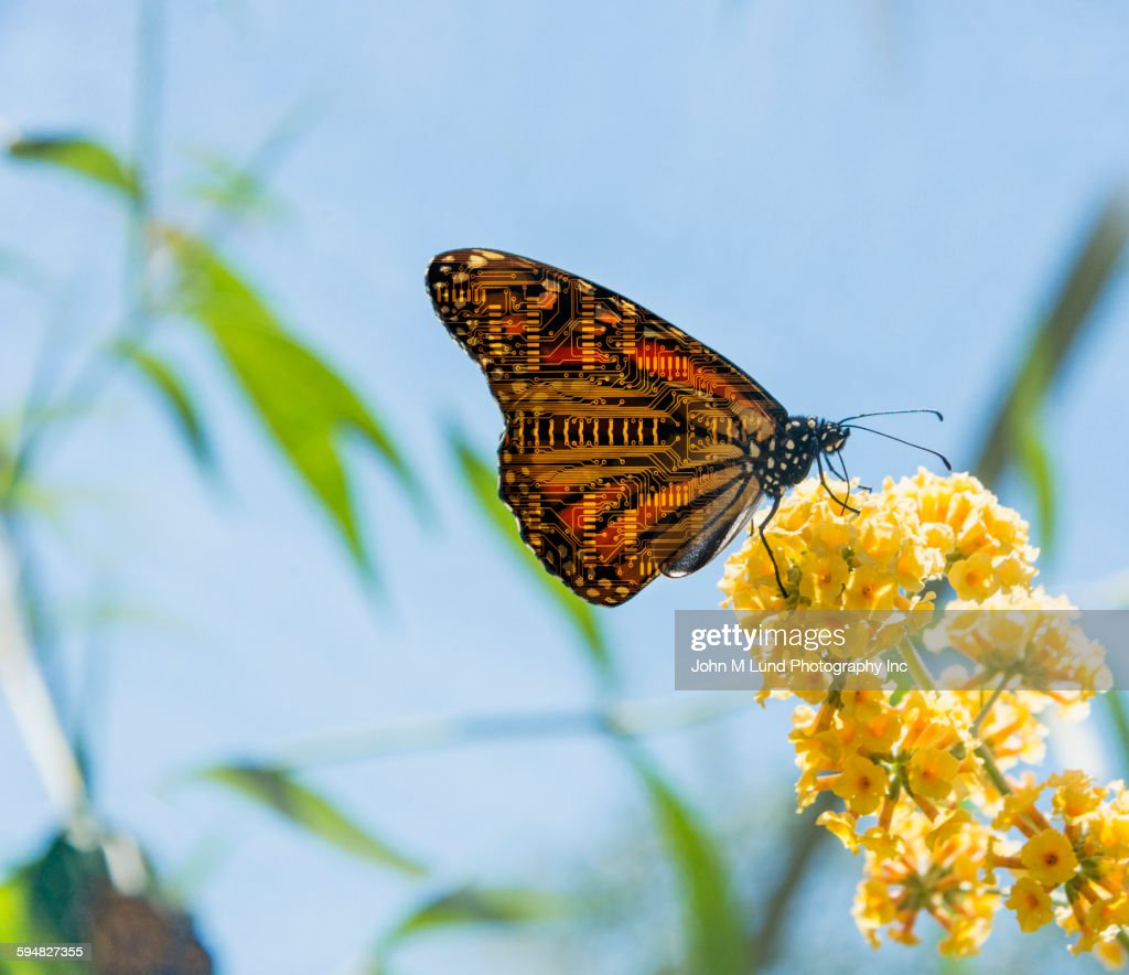 butterfly with circuit board wings perching on flowers stock photo