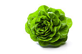 Fresh organic butterhead lettuce isolated on white background