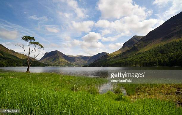 Buttermere Lakeside Tree