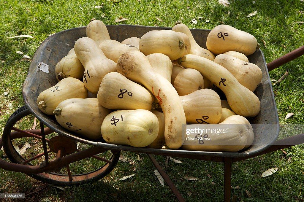 Butternut pumpkins for sale in wheelbarrow. : Stock Photo