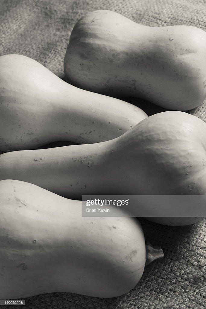 Butternut squash still life : Stock Photo