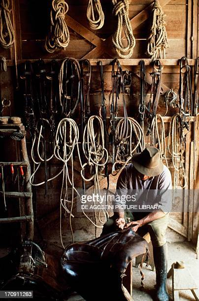 A buttero fixing a saddle Maremma Regional Park Tuscany Italy