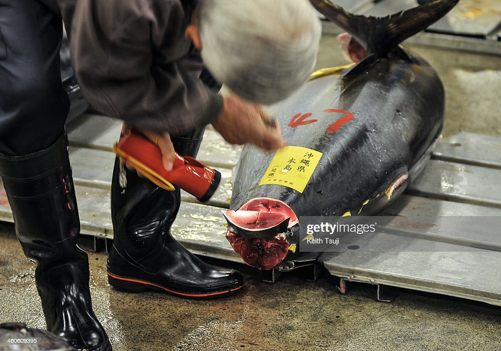 A buyer inspects a Bluefin tuna carefully before the year's first tuna auction at Tsukiji Fish Market on January 5, 2014 in Tokyo, Japan. Tsukiji Fish Market is best known as one of the world's most famous fish markets, handling thousands of tons of seafood daily.