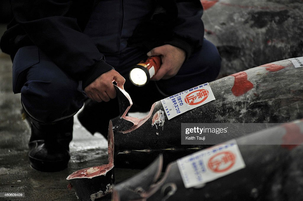 A buyer inspects frozen Bluefin tuna carefully before the year's first tuna auction at Tsukiji Fish Market on January 5, 2014 in Tokyo, Japan. Tsukiji Fish Market is best known as one of the world's most famous fish markets, handling thousands of tons of seafood daily.