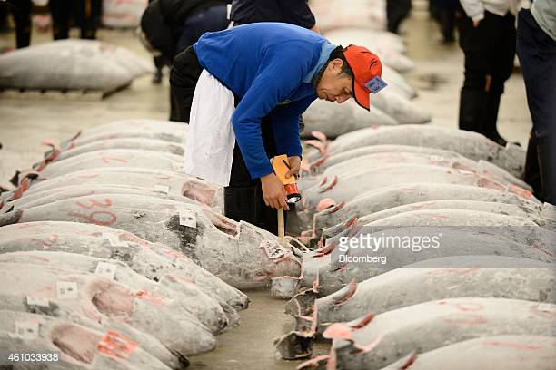 A buyer inspects frozen tuna prior to the year's first auction at Tsukiji Market in Tokyo Japan on Monday Jan 5 2015 Auctions at Tsukiji the world's...