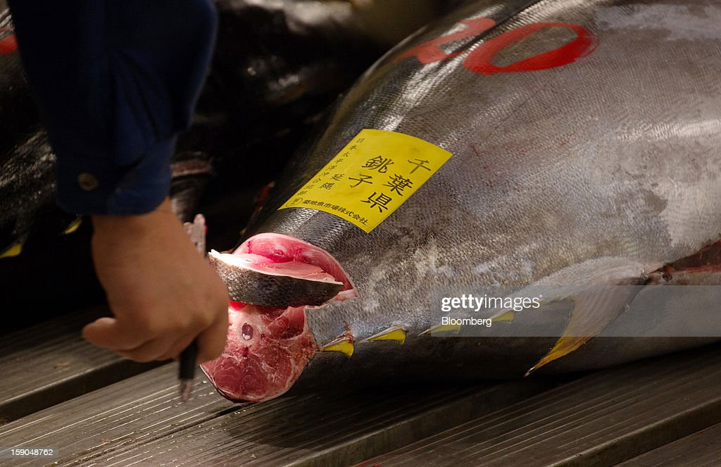 A buyer inspects tuna prior to the year's first auction at Tsukiji Market in Tokyo, Japan, on Saturday, Jan. 5, 2013. Kiyomura K.K., a Tokyo-based sushi chain operator, outbid rivals for a second year in a row for the most expensive fish ever sold at the market, saying the purchase may help improve Japan-China relations. Photographer: Noriyuki Aida/Bloomberg via Getty Images