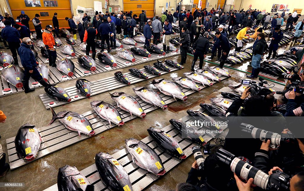 Buyers inspect Bluefin tuna carefully at Tsukiji Fish Market on December 30, 2013 in Tokyo, Japan. Tsukiji Fish Market is best known as one of the world's most famous fish markets, handling thousands of tons of seafood daily.