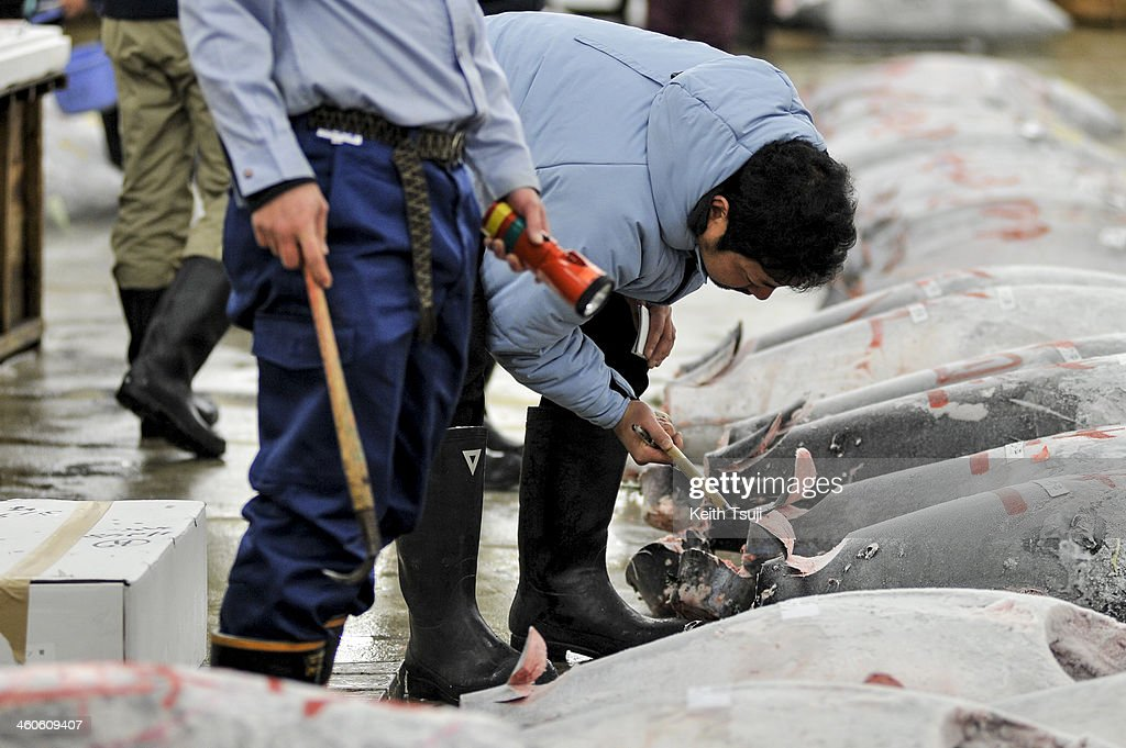 Buyers inspect frozen Bluefin tuna carefully before the year's first tuna auction at Tsukiji Fish Market on January 5, 2014 in Tokyo, Japan. Tsukiji Fish Market is best known as one of the world's most famous fish markets, handling thousands of tons of seafood daily.