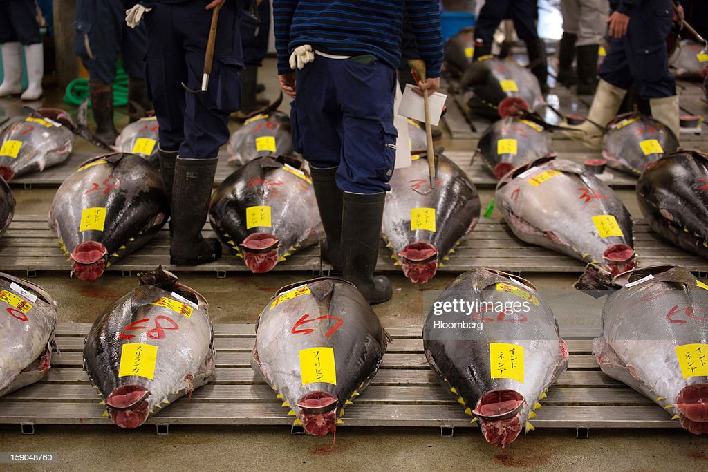 Buyers inspect tuna prior to the year's first auction at Tsukiji Market in Tokyo, Japan, on Saturday, Jan. 5, 2013. Kiyomura K.K., a Tokyo-based sushi chain operator, outbid rivals for a second year in a row for the most expensive fish ever sold at the market, saying the purchase may help improve Japan-China relations. Photographer: Noriyuki Aida/Bloomberg via Getty Images