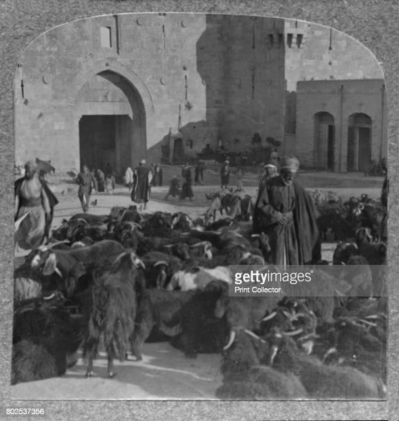 Buying goats at the Damascus Gate Jerusalem' c1900 From Journey in All Lands Palestine [Realistic Travels London Cape Town Bombay Melbourne Toronto...