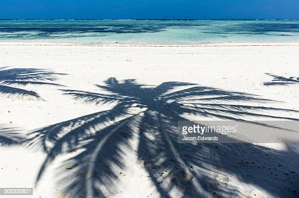 The shadow of palm tree fronds on a pristine tropical island beach overlooking the turquoise waters of the Indian Ocean.