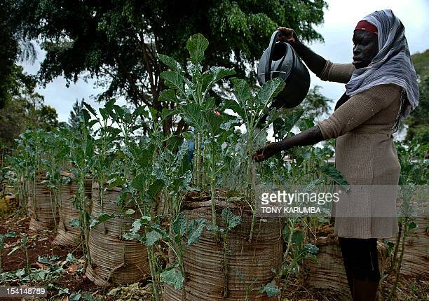 By Anne CHAON A resident of Nairobi's sprawling Kibera slum water's vegetables planted in a sackgarden on October 15 2012 The innovative project...