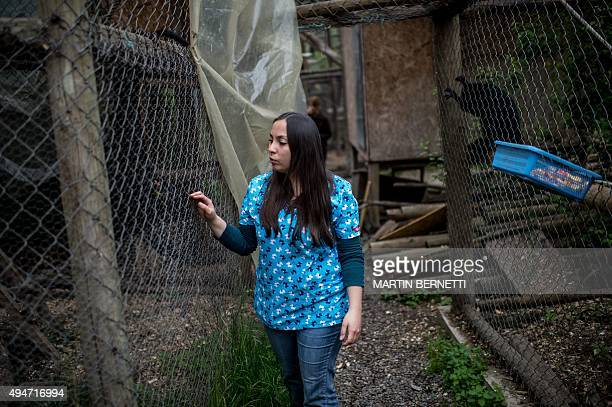 STORY by Giovanna Fleitas Chilean veterinarian Nicole Rivera takes a look at the monkeys in their cages at a primate rehabilitation centre in...