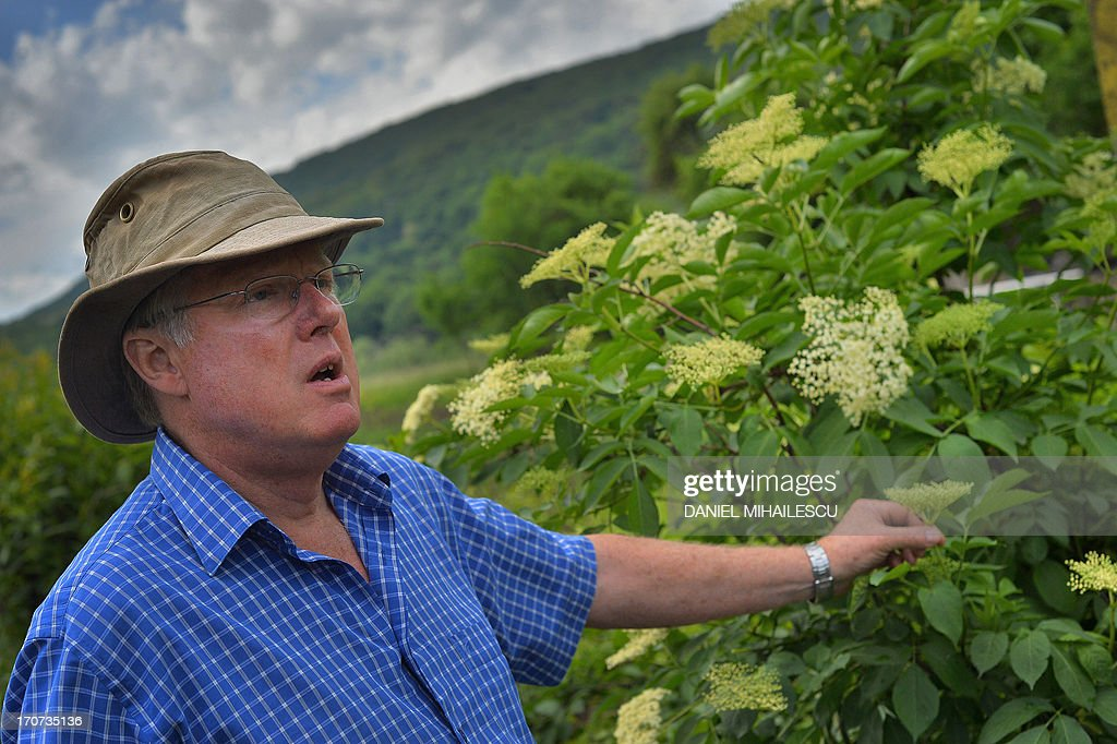 STORY by ISABELLE WESSELINGH - Picture taken on May 25, 2013 shows Jim Turnbull, British investor and director of a factory processing elder flowers in the village of Saschiz in the Transylvania region of Romania. If elder trees add to the beauty of Romania's landscapes, their white flowers help its rural economy grow when they are turned into cordials exported to Britain and Japan. Every year Romanians anxiously await the blossom season in May and June to pick the delicately-scented flowers and concoct a traditional soft drink called 'socata'. AFP PHOTO / DANIEL MIHAILESCU