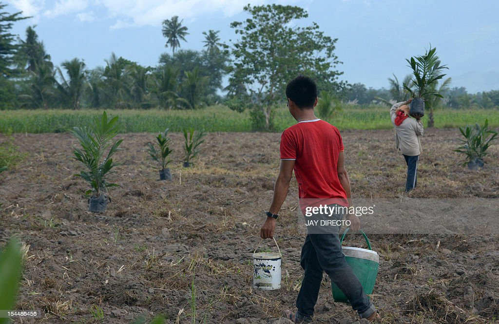 ECONOMY by Jason Gutierrez In this photo taken October 11, 2012, farmers planting palm oil tree seedlings in a farm in Datu Abdullah Sangki in southern Philippines on October 11, 2012. Peneza quit his sailor's job abroad to become a farmer in the southern Philippines, hoping a newly signed peace deal would spur economic growth in the often lawless region. Peneza, 38, put much of his savings this year into a seven-hectare (17-acre) palm oil farm located in a Muslim majority area that local and foreign investors have long considered a no-man's land.