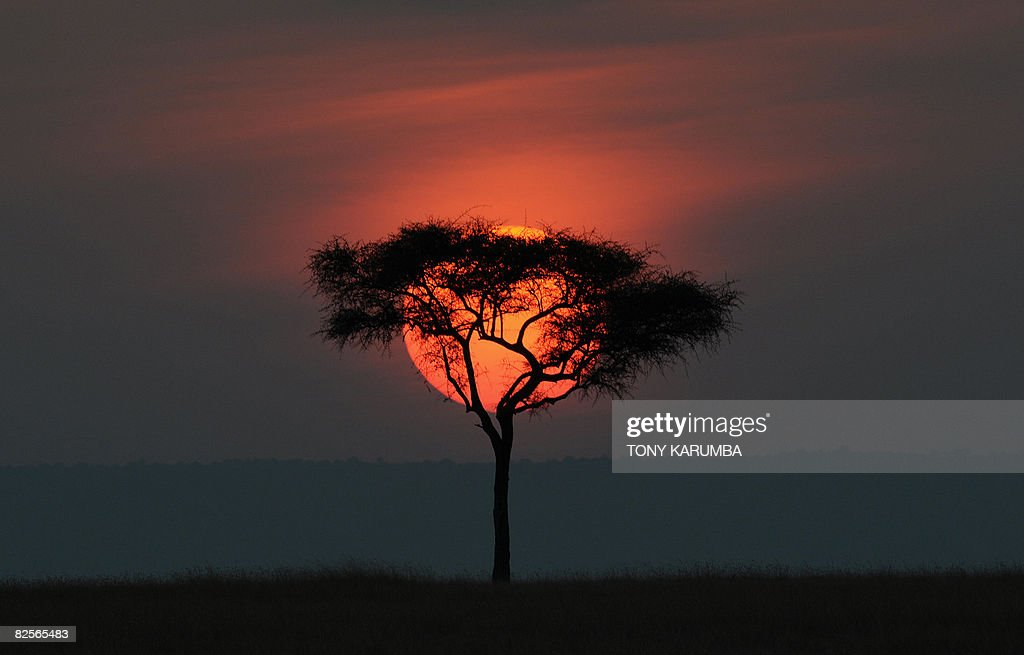 By JeanMarc Mojon The sun sets on July 30 2008 over the Olare Orok conservancy within the Masai Mara eco system Investors and conservationists have...