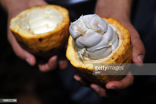 STORY by Marianela Jimenez A worker shows the seed of cacao at the Association of Small Producers of Talamanca one of the biggest cooperatives in...
