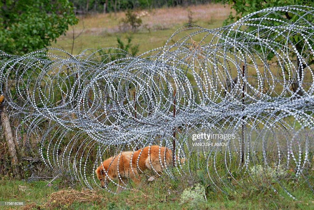 STORY by Max DELANY A dog gets through a four-foot (1.2-metre) high coils of razor wire that divide the Russian-backed breakaway territory from Georgian-controlled land in village of Khurvaleti in Georgia on July 25, 2013. On the night of August 7-8, 2008, Georgia's pro-Western President Mikhail Saakashvili launched an offensive to reclaim breakaway region South Ossetia only to see Russian forces sweep into Georgia. The 2008 war between Georgia and Russia over the separatist region of South Ossetia may have only lasted five days.