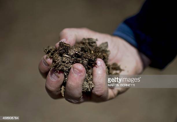 STORY by Miguel Sanchez A man holds dried cow dung at a farm which has its own biogas plant in the town of Tinguiririca about 150 km south of...