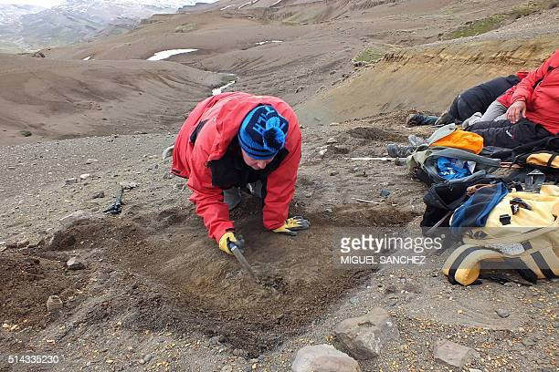 STORY by Miguel Sanchez A scientist digs in a recently explored remote area in southern Chile rich with dinosaur fossils searching for clues of how...