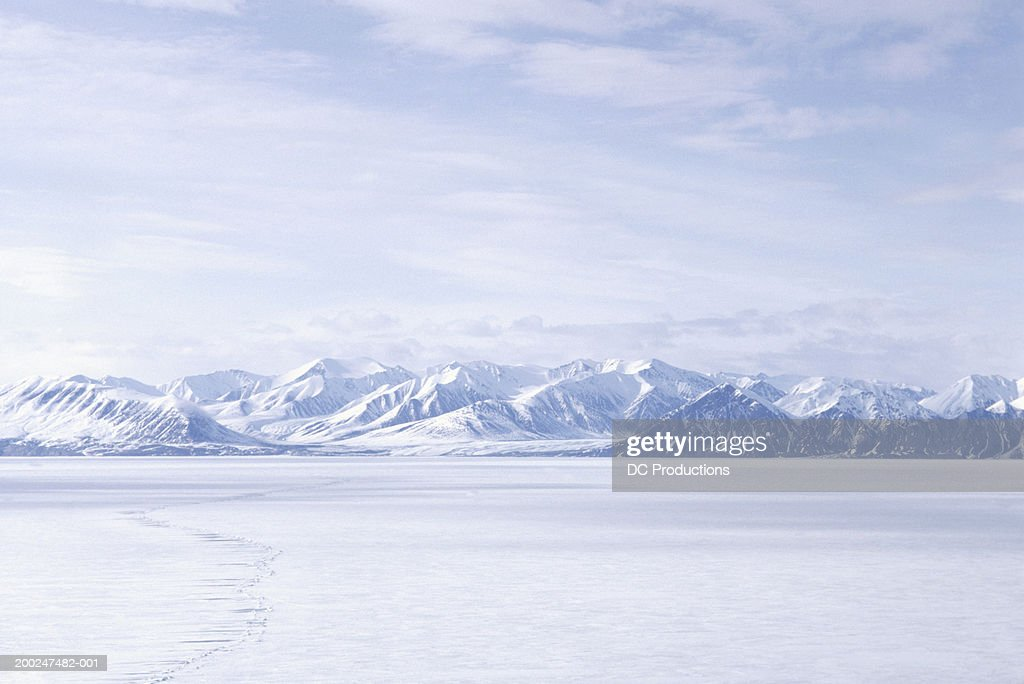 Bylot Island, NWT, Canada : Photo