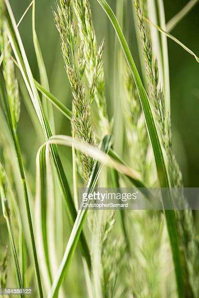 キャバレー乙女の芝生