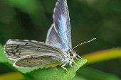 butterfly closeup closeup abstract summer season macro photo
