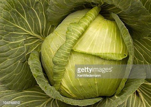 Cabbage Head