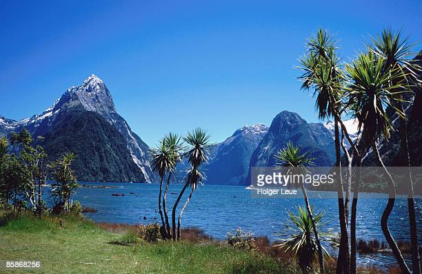 Cabbage trees at Milford Sound with Mitre Peak in background at left.
