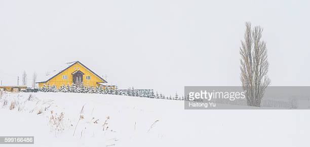 Cabin house and the famous 'Ken and Mary's Tree', Hokkaido, Japan.