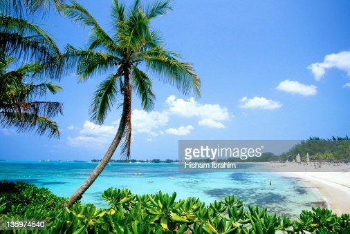 Cable Beach and Palm Tree, Nassau, Bahamas