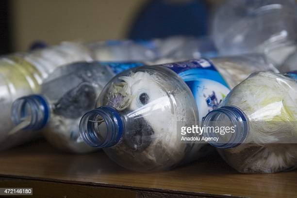 Cacatua sulphurea that were successfully secured from illegal wildlife trading are seen into empty bottles in Surabaya East Java Indonesia on May 04...