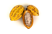 'Cacau' (Theobroma cacao), native fruit from amazon rainforest, whole and sliced showing pulp and seeds, on white background