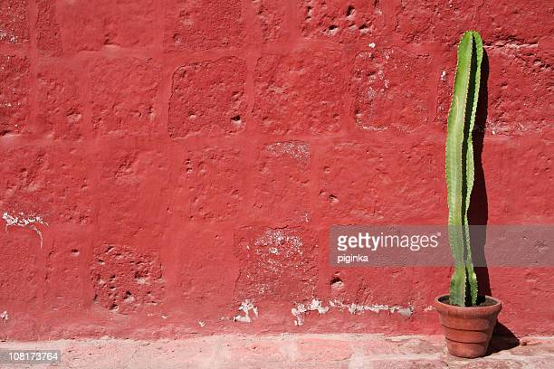 Cactus Against Red Wall