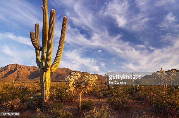 Cactus and desert landscape with bright blue sky background
