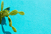 Green cactus against a light blue wall.