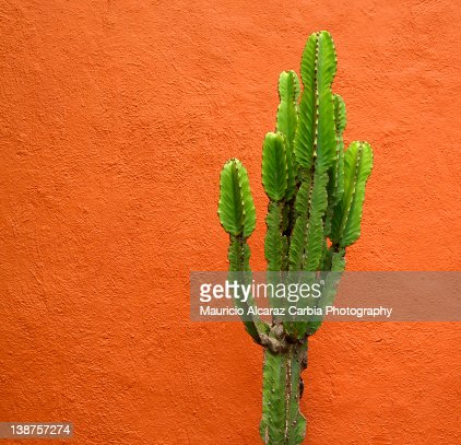 cactus hispanic singles Pineiro released the single, audi in may 2017  pineiro signed to cactus jack records on november 8, 2017, pineiro was on the mtv show trl, .