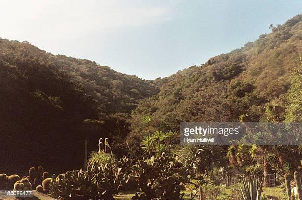 Cactus Field, Catalina Island
