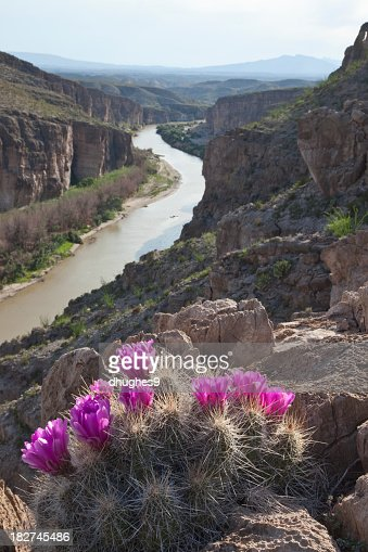 Cactus flowers overlooking the Rio Grande