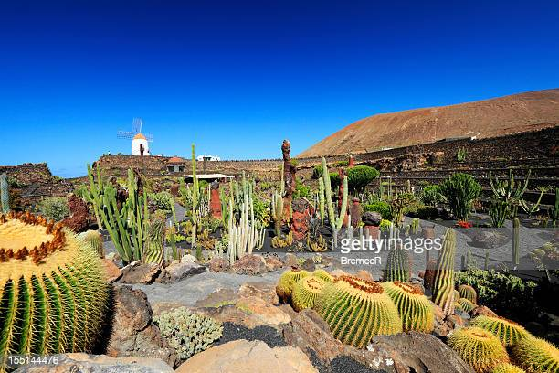 Lanzarote stock photos and pictures getty images for Jardin de cactus lanzarote