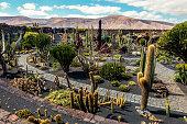 View of cactus garden in Lanzarote (islas Canarias). Spain