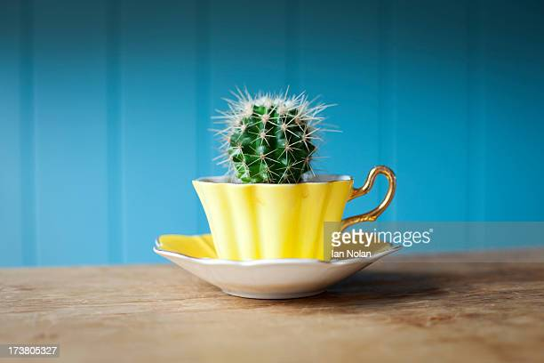Cactus growing in teacup on desk